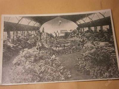 Zahradnická výstava 1910 Praha Tropický háj