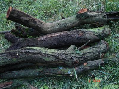 Třešně,hrušky,švestky v met. na uzení a grilování