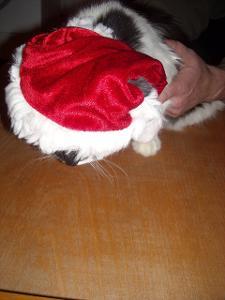kostým - vánoční čapka pro mazlíka
