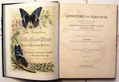 Lepidopteren von Madagascar. M.SAALMÜLLER 1884