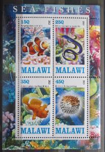 Malawi 2013 Mořská fauna, ryby Aršík 0505