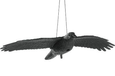 Létající maketa havran plašéní špačků holubů vrána 0643 6556