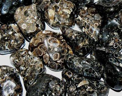 Hrst turritelly, fosilie, velké kameny,  cca 40g