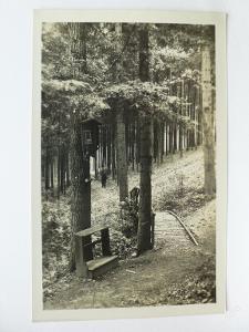 Lázně Velichovky, Jaroměř, Náchod Z lázeňkeho lesa
