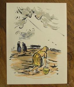 V.Sedláček - Orig. litografie - (F424)