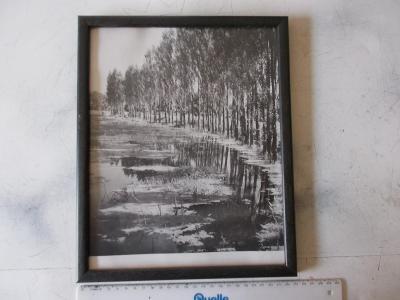 Umělecká fotografie fotka obraz rámováno antireflex Olše u rybníka