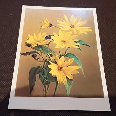 Pohlednice květina