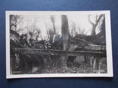 Hodonín Kyjov Bzenec Bisenz Památný strom Stará lípa