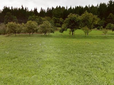 Prodej louky 5 025 m² Lužná, okres Vsetín (34 Kč/m2)