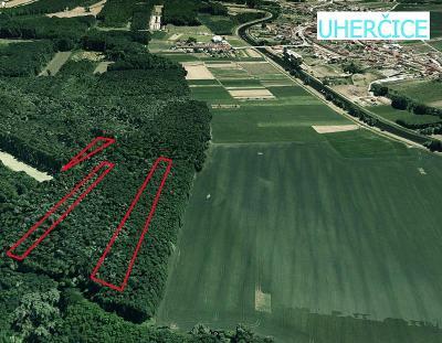 Prodej lesa 4 543 m² Uherčice u Hustopečí, okres Břeclav (38 Kč/m2)