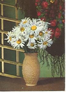 sedmikrásky, foto J. Větroň 1973 Hodně zdraví,štěstí a úspěchů 3-1695°