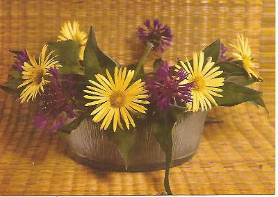 kytice, foto Miroslav Anger, srdečné přání 3-1703°°