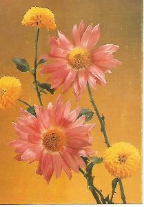kytice, foto V. Fiedlerová, srdečné přání 3-1706°°