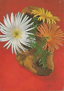 gerbery, foto Miroslav Anger, srdečné přání 3-1749°