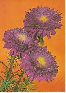 květy, foto Felix Kodeš, Pressfoto ČTK 3-1775°