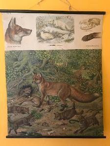 Školní plakát, Liška , Albert Kull 1920