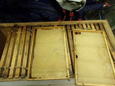 Plástve, rámečky, včelí vosk