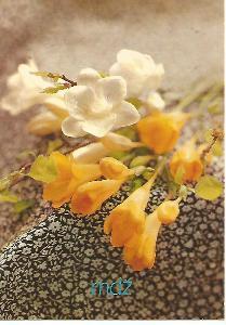 květy, foto Věra Gironiová, MDŽ 4-2356°°