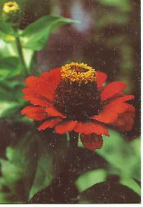 květ, foto Christov (Bulharsko) 5-2557++