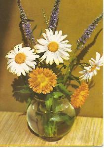 kopretiny gerbery, foto Adolf Mlejnek, Srdečné přání 5-2634°°