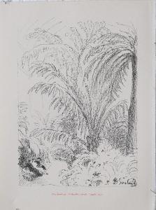 Max Švabinský, litografie