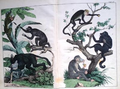 1842 Zvířata a další 90 mědirytin ručně kolorovaných v jedné knize