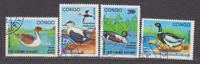 Kongo - ptáci