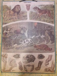 Školní plakát - Kočka domácí , Albert Kull 1920