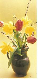 narcisy tulipány, foto Jaroslav Žák, MDŽ 4-3061++ úzký formát