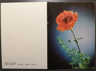 Retro pohlednice barevná 148x105mm - MDŽ