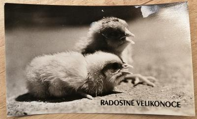 Retro pohlednice - Radostné velikonoce - 140 x 85 mm