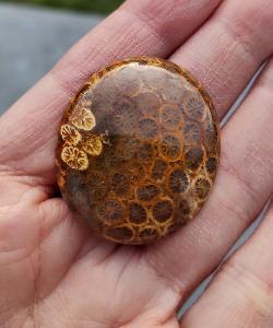 Zkamenělý korál, ID 1812, 35x30 mm
