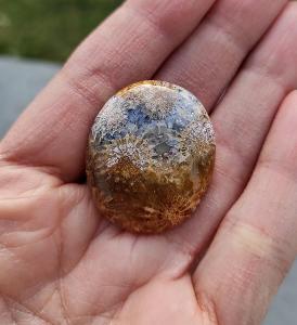 Zkamenělý korál, ID 1821, 31x26 mm