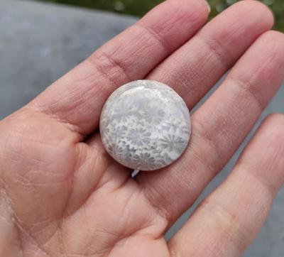 Zkamenělý korál, ID 1814, průměr 25 mm