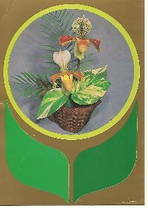orchidej, foto Živodar Tvarožek, Pravda 3-3343°°