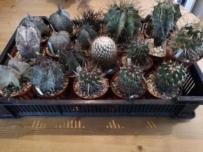Kaktusy - různé (přepravka)