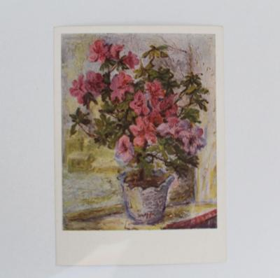 Azalka na okně - pohlednice