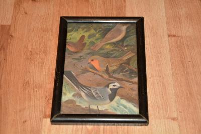 obrázek, stará reprodukce, ptáčci