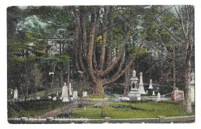 Pohlednice, Kanada, ST. STEPHEN Cemetery, The Old Pine , MF, 17/59