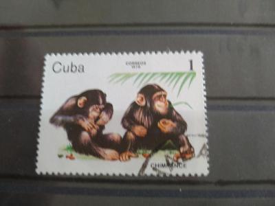 Opice, Kuba