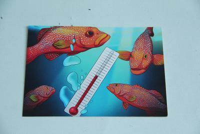 reklamní pohlednice nepopsaná rozměr    15 x 10,5 cm VÍC V POPISU