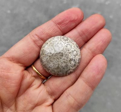 Zkamenělý korál, ID 1927, 29x28 mm