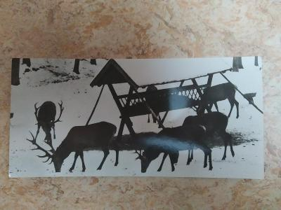 """Pohlednice jelen jeleni krmelec zima černobílá """"poloviční"""" pohlednice"""
