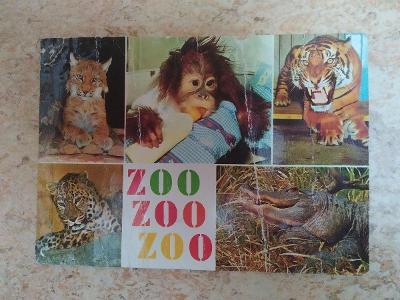 Pohlednice rys tygr orangutan levhart aligátor ZOO poškozená