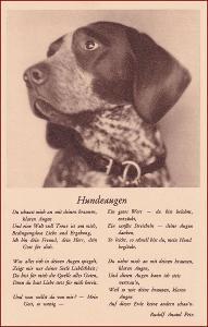 Pes (zvířata) * hlava zvířete, báseň, propagační * M3123