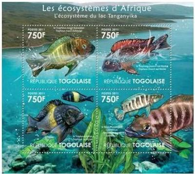 Togo 2011 Ryby jezera Tanganyika Mi# 4181-84 Kat 12€ 2140B