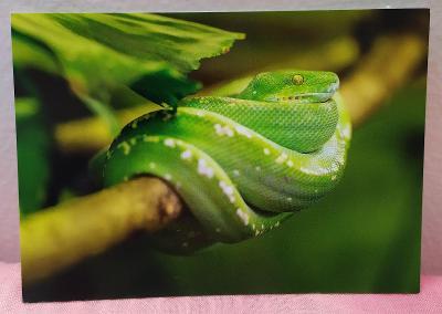Pohlednice - Zelený had (vlastní výroba) - čistá VF