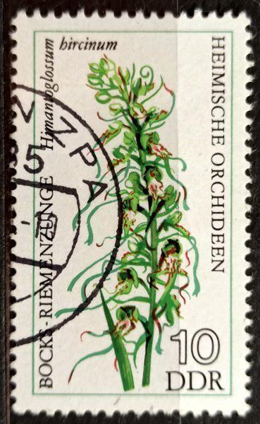 DDR: MiNr.2135 Himantoglossum Hircinum 10pf, European Orchids 1976