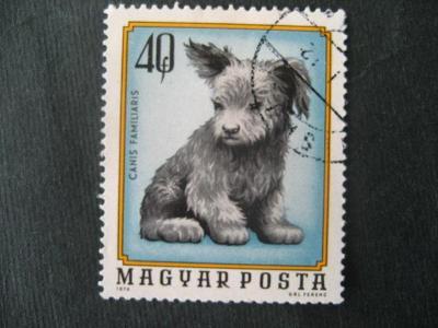 Maďarsko fauna pes ražené