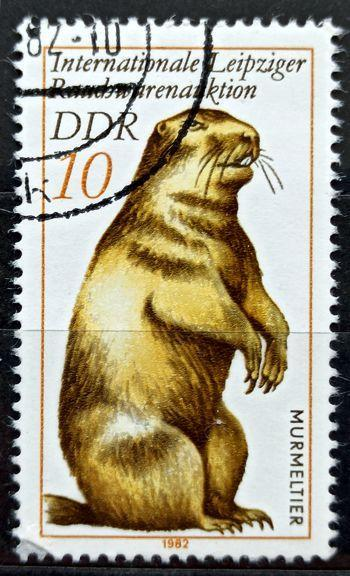 DDR: MiNr.2677 Marmot 10pf, International Fur Auction, Leipzig 1982